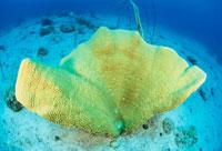 サンゴ 25356001321| 写真素材・ストックフォト・画像・イラスト素材|アマナイメージズ