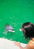 水中から顔を出すイルカ