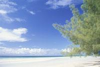 グランドバハマ島のビーチ 25356001423| 写真素材・ストックフォト・画像・イラスト素材|アマナイメージズ