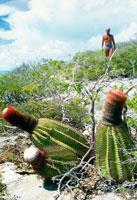 タークスカイコス諸島のサボテン 25356001535| 写真素材・ストックフォト・画像・イラスト素材|アマナイメージズ