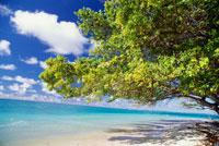 ローラビーチ 25356001614| 写真素材・ストックフォト・画像・イラスト素材|アマナイメージズ