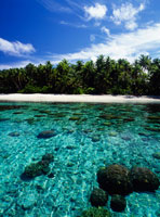 水面から見えるサンゴ 25356001698| 写真素材・ストックフォト・画像・イラスト素材|アマナイメージズ