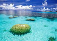 水面から見えるサンゴ 25356001699| 写真素材・ストックフォト・画像・イラスト素材|アマナイメージズ