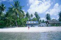 アルノ環礁パールファーム11月 ミクロネシア 25356001721| 写真素材・ストックフォト・画像・イラスト素材|アマナイメージズ