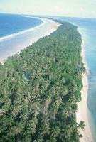 生い茂るヤシの木 8月 マーシャル諸島共和国