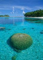 浅瀬のハマサンゴ マーシャル諸島共和国