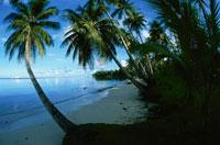 ヤシの木とビーチ(モエン島) ミクロネシア
