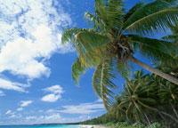 アルノ環礁アルノアルノ島 マーシャル諸島共和国