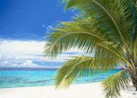 マジュロ環礁カロリン島 マーシャル諸島共和国