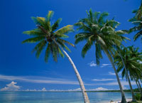 マジュロ環礁ローラのヤシ マーシャル諸島共和国