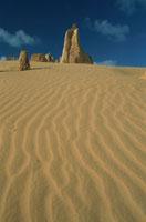 ピナクルズ ナンブング国立公園  西オーストラリア州