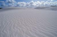 グレイ(砂丘) ナンブング国立公園 西オーストラリア州