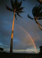 ヤシの木と虹 トラック諸島