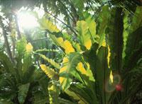 ミリ環礁ワウ島内 マーシャル諸島共和国
