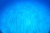 バハマの白砂の海底