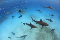 サメの群れと美しい海