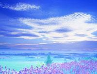 ラベンダーと丘陵地  夕景 25372000157| 写真素材・ストックフォト・画像・イラスト素材|アマナイメージズ