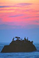 夕暮れの海と海鵜