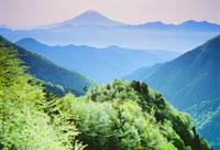 朝の富士と新緑の安倍峠