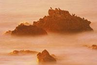 岩場のウミウ 夕景