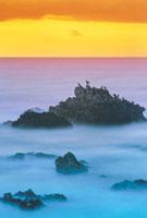 ウミウと岩礁 夕景 山北町笹川 新潟県