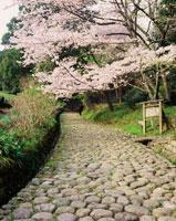 旧東海道金谷坂