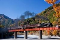 大井川鉄道SLと紅葉 25388006178| 写真素材・ストックフォト・画像・イラスト素材|アマナイメージズ
