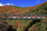 箱根登山鉄道の秋 25388011602| 写真素材・ストックフォト・画像・イラスト素材|アマナイメージズ