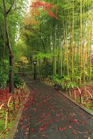 竹林の小経 25388014555| 写真素材・ストックフォト・画像・イラスト素材|アマナイメージズ