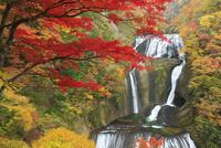 袋田の滝 25388014731  写真素材・ストックフォト・画像・イラスト素材 アマナイメージズ