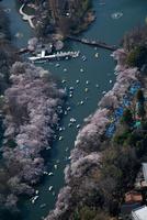 満開の桜の花見客と井の頭恩賜公園池周辺