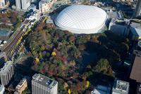 紅葉の小石川後楽園と東京ドーム周辺