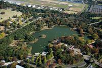 水鳥の池周辺(国営昭和記念公園内)の紅葉