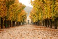 シェーンブルン宮殿の並木道