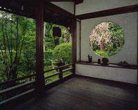 新善光寺 丸窓の桜