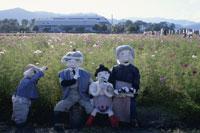 コスモス畑でおにぎりを食べる人形