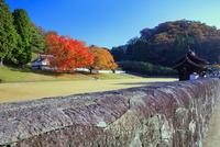 旧閑谷学校 石塀と紅葉の階の木と校門(鶴鳴門)