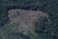 ジャングルの中の密伐採
