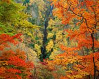 秋の松川渓谷 八滝