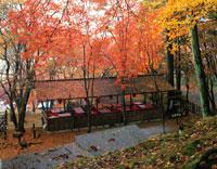 秋の高雄 25516024253| 写真素材・ストックフォト・画像・イラスト素材|アマナイメージズ