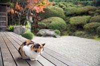 ネコ 金福寺にて 25516026324  写真素材・ストックフォト・画像・イラスト素材 アマナイメージズ