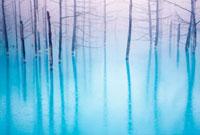 霧の青い池 白金 25516031849  写真素材・ストックフォト・画像・イラスト素材 アマナイメージズ