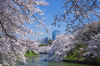 桜咲く千鳥ヶ淵とビル街 25516036427| 写真素材・ストックフォト・画像・イラスト素材|アマナイメージズ