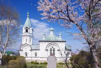 桜咲く函館ハリストス正教会