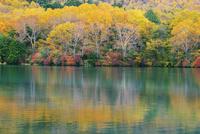 紅葉の湯ノ湖 25516046219  写真素材・ストックフォト・画像・イラスト素材 アマナイメージズ
