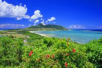 ハイビスカス咲く玉取崎展望台よりはんな岳と平久保半島 石垣島