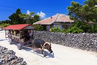 水牛車と民家集落 竹富島 25516048647| 写真素材・ストックフォト・画像・イラスト素材|アマナイメージズ