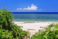 ハマユウ咲くペムチ浜 波照間島
