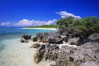 ハマシタン群落とペー浜 毛崎 波照間島