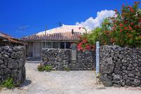 ブーゲンビレア咲く安里屋クヤマの生誕の地 竹富島